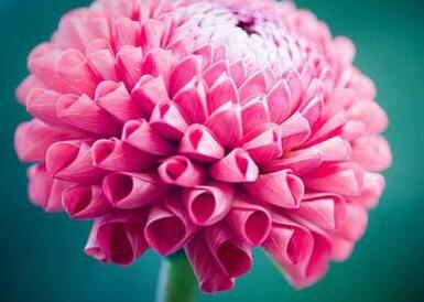 优美早安心语:谢谢你,喜欢我,陪了我这么久,即使我骄傲、自私、做作的时候,你都在