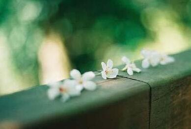 早安心语:世间万事,只该难得,不该易得。易得之事易失去,难得之事难失去