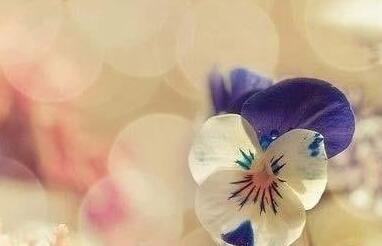 晚安心语:心简单,世界就简单,幸福才会生长;心自由,生活就自由,到哪都有快乐