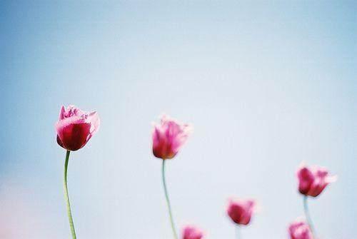 世界那么大,人生那么长,总会有那么一个人,让你想要温柔的相待(优美爱情语录句子)