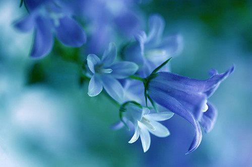 活得平和,才能在心里装下满满的幸福(人生感悟经典语录句子)