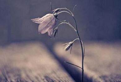 早安心语:人静而后安,安而能后定,定而能后慧,慧而能后悟,悟而能后得