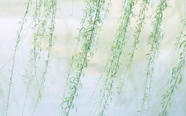 低调谦逊,才能走得更远 - 人生感悟美文句子欣赏