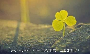 早安心语:有时候,生活只能是后知后觉,但却必须勇往直前