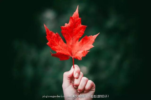 韵味在深秋,怡悟在自然 - 美文欣赏